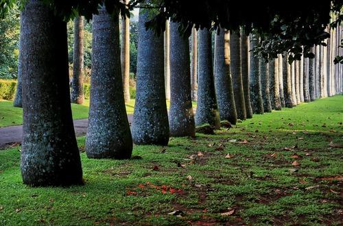 Шри-Ланка.Ботанический сад в Перадении 65